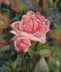 И.Н.Флоринская. Роза. 2007 г. 30х26. бумага, акварель.