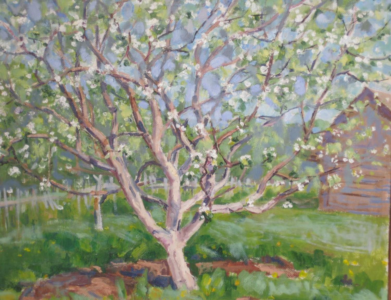 В.С.Токмаков. Яблоня. 2005. 52х42. Картон, масло.